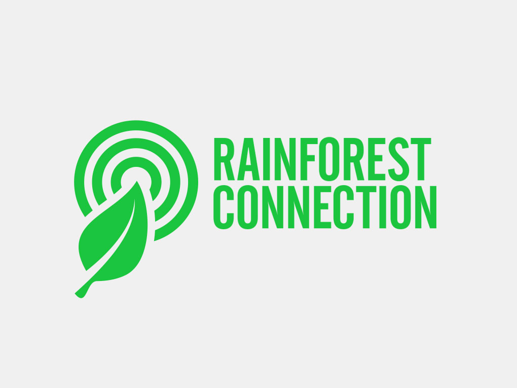 rainforest_a