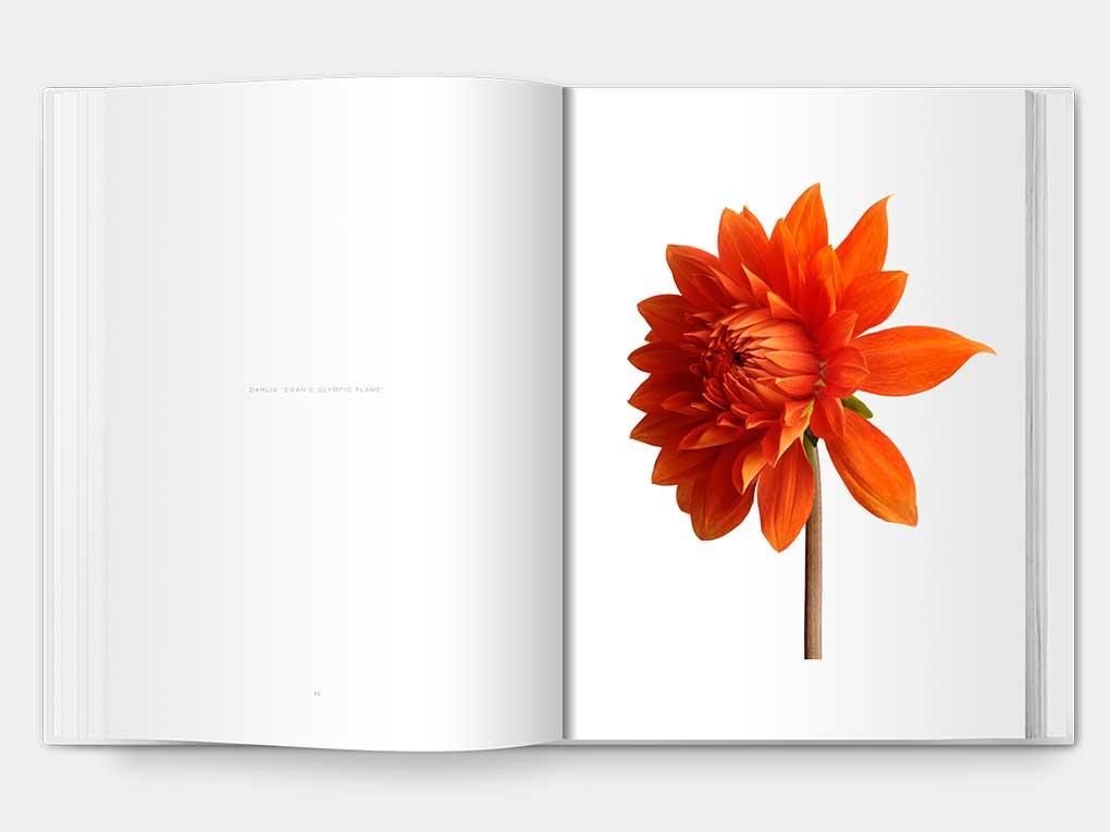 flower_D