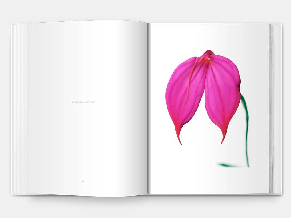 flower_F